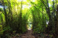 Walk path through bamboo forest in Asia. Beautiful nature - stock photo