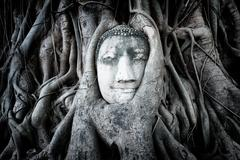 Buddha sculpture in tree roots Stock Photos