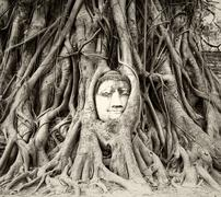 Buddha head in tree roots in Wat Mahathat, Ayutthaya Stock Photos