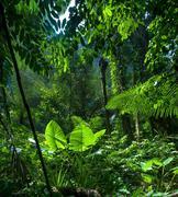 Adventure background. Green jungle forest landscape - stock photo