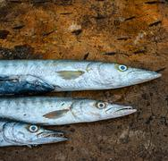 Barracuda fish abstract background Stock Photos