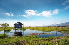 Countryside agriculture in Burma (Myanmar). Inle Lake famous travel destinati - stock photo