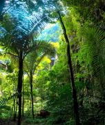 Humid tropical climate of jungle rainforest Stock Photos