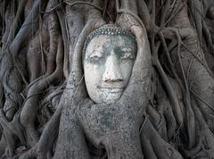 Face of Buddha in archeological site in Thailand Stock Photos