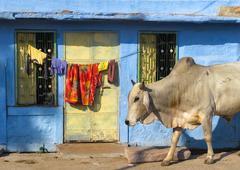 India Rajasthan Jodhpur. Blue city street life photography Stock Photos