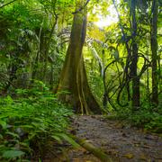 Jungle forest with tropical trees. Adventure background Stock Photos