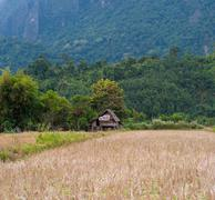 Panoramic view of rice field and green hills. Beautiful nature of rural Laos Stock Photos
