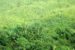 Hills overgrown by forest in rural Laos - stock photo