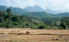 Rural Laos panoramic view. Rice paddy and mountains on horizon Stock Photos