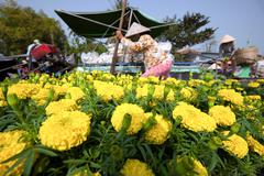 Flowers for sale in Mekong delta Cai Rang floating market in Can Tho Vietnam - stock photo