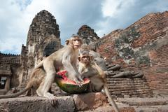 Thailand landmark - Monkey temple in Lopburi Stock Photos