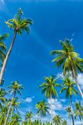 Vertical photography of palm trees against blue sky at sunny summer day Stock Photos