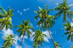 Palm trees leaves and blue sky background Stock Photos