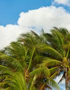 Leaves of palm tree against blue sky with clouds at breeze near sea coast - stock photo