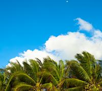Blue sky background with green leaves of palm trees Stock Photos