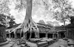 Angkor Wat Cambodia. Ta Prohm Khmer ancient Buddhist temple in jungle forest - stock photo
