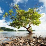 Nature photography of beautiful tree growing on sea shore Stock Photos