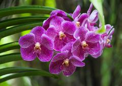 Orchid Tropical Flower Nature Background Stock Photos