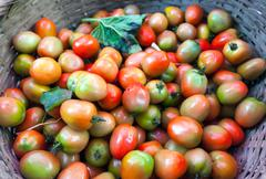 Organic tomatoes from local market of vegetables in rustic basket Stock Photos