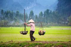Vietnamese farmer on rice paddy field in Ninh Binh Stock Photos