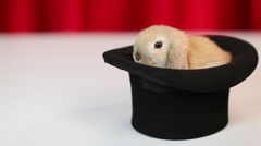 Rabbit in a hat Stock Footage
