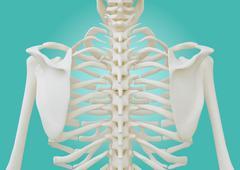 Stock Illustration of Chest Skeleton on pastel green background.