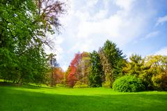 Beautiful spring forest with trees of all colors - stock photo