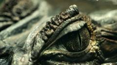 Alligator Eye Closeup Stock Footage