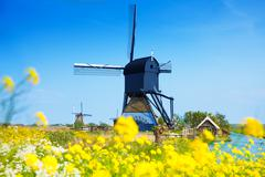 Stock Photo of Kinderdijk, Netherlands at spring with flowers