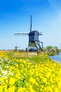 Kinderdijk watermill over spring yellow flowers Stock Photos