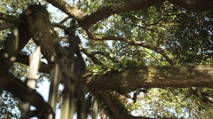 Rack focus from live oaks to old iron work-Charleston Stock Footage