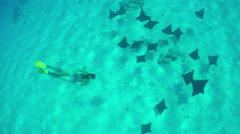 Young woman swimming with wild stingray rays in blue lagoon Stock Footage
