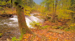 Leaves dropped from the trees on the ground Stock Footage
