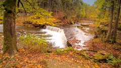 Big trees and the river in the forest of Nommeveski Stock Footage