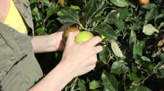 Young woman picking and biting apple Stock Footage