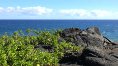 Barren lava rock landscape with green plant - blue sky and ocean background Stock Footage
