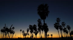 Palm trees silhouette at tropical sunset - Golden hour in Venice beach Stock Footage