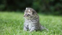 Tabby kitten sitting on grass Stock Footage