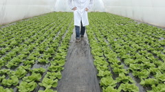 Stock Video Footage of Agronomist farmer  in greenhouse lettuce