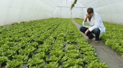 Farmer in the vegetables greenhouse  - stock footage