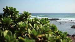 Plant and sea, Kauai, Hawaii Stock Footage