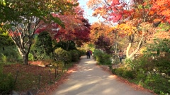Visitors on the scenic walkway at The Garden of Morning Calm at autumn. Stock Footage