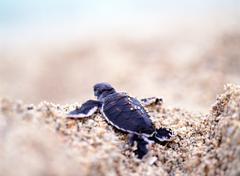 Back of a small turtle on sand Stock Photos