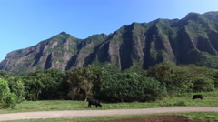 Mountains of Hawaii - Oahu, Kaneohe, Kaaawa valley, Kualoa ranch, film location Stock Footage