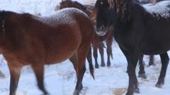 Beautiful horse on the farm - stock footage