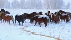 Herd of horses in winter Stock Footage