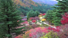 Autumn in The Garden of Morning Calm. Gapyeong, South Korea Stock Footage