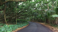 Slow cruise through rain forest woods  in the road - Hawaii, Big Island - stock footage