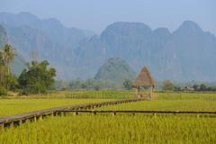 Rice fields farm at Laos - stock photo