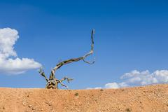 scenic dead wood root in the dry landscape - stock photo